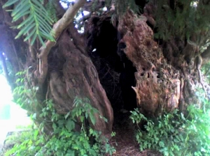 Yew Tree Cauldron