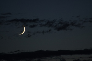 Sickle Moon
