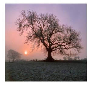 Simon Fraser Photography | Ash tree at sunrise in midwinter, South Tyne valley