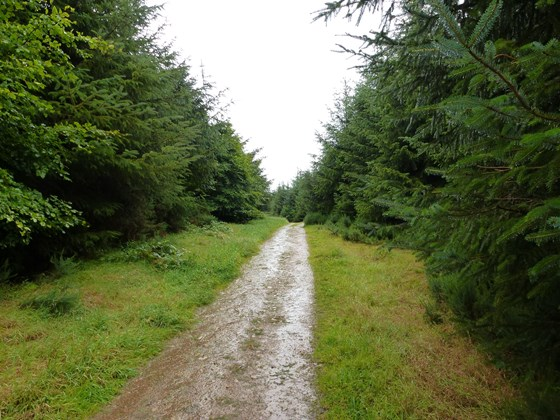 Pitfour Observatory trail.jpg