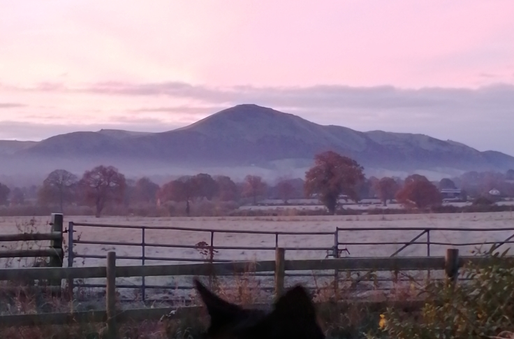 Caradoc & Cat Ears